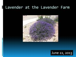 Slide 4 Lavender on the farm