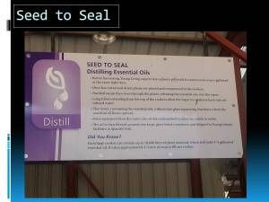 Slide 5 Seed to Seal process