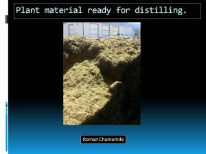 Slide 6 Plant material ready for distillation